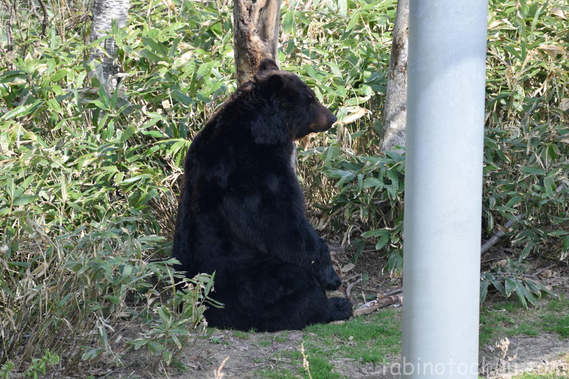 クマ マーキング