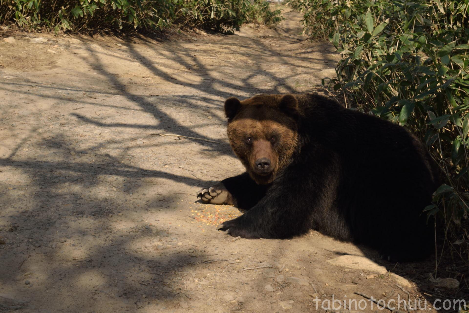 ご飯中のクマ