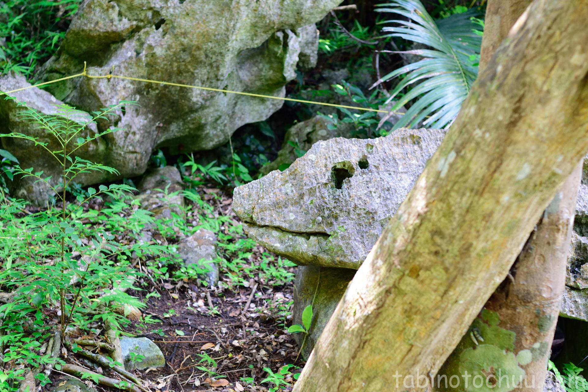 大石林山 イグアナ