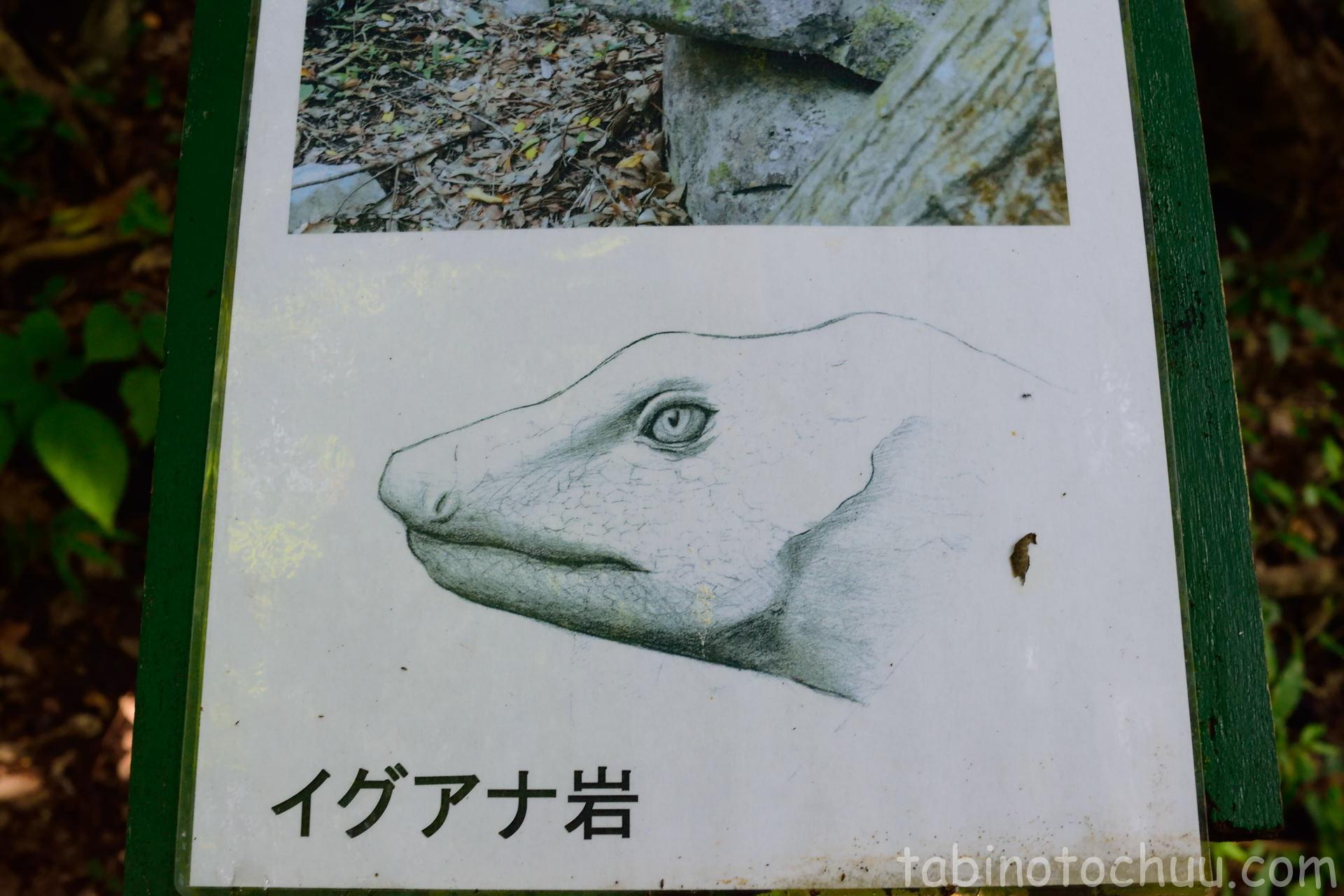 大石林山 イグアナ(正解)
