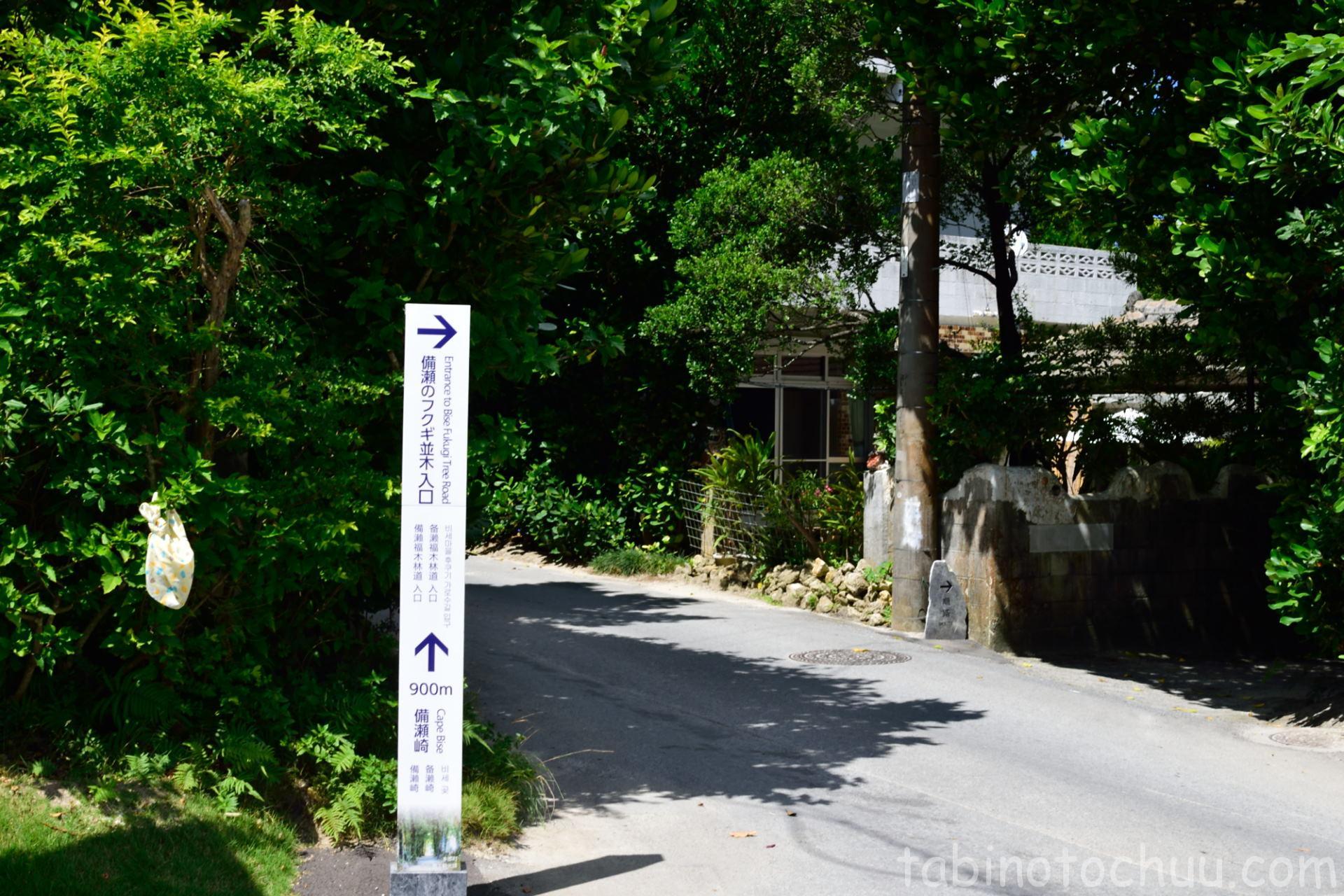 備瀬のフクギ並木 入口