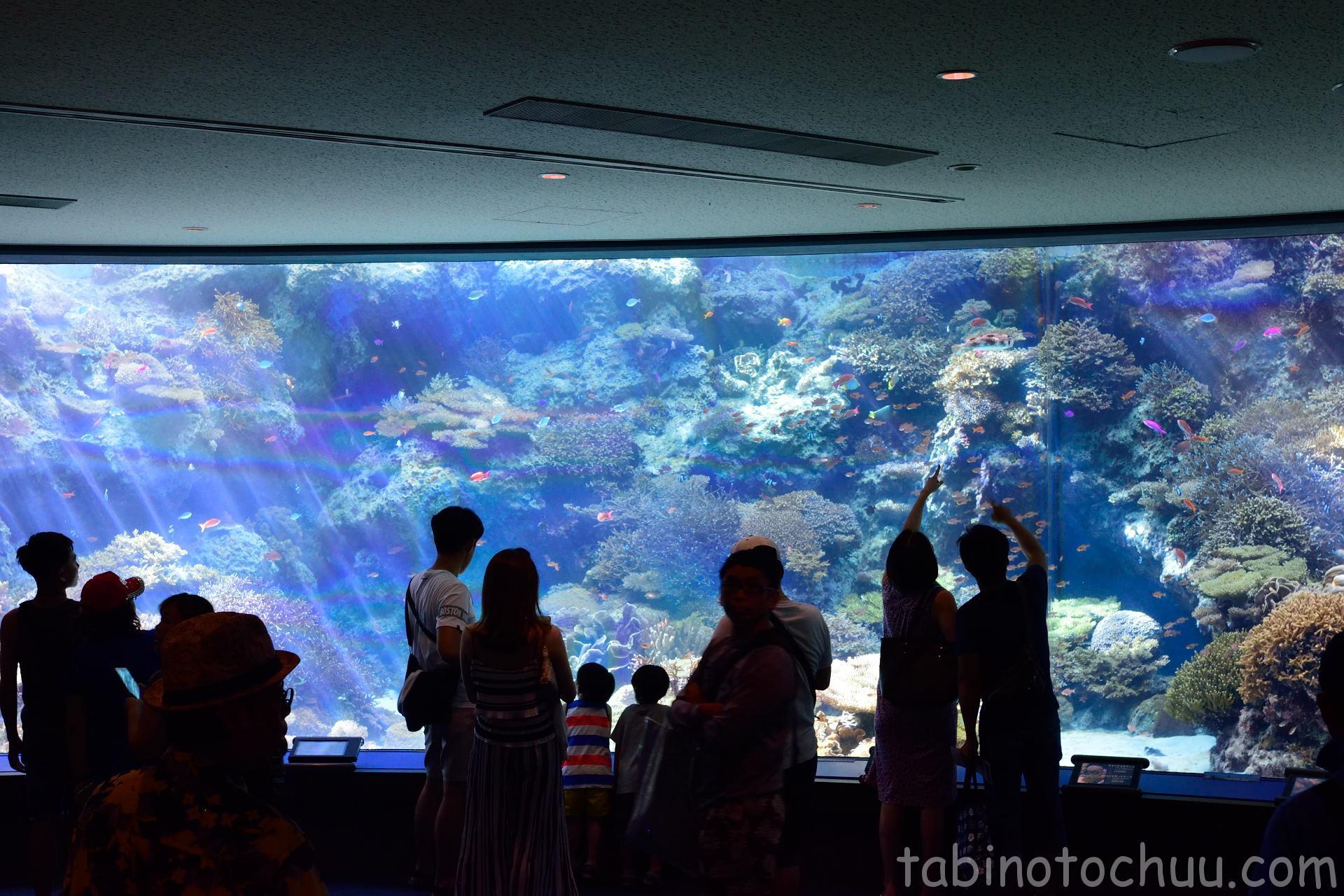 美ら海水族館 熱帯魚たくさん