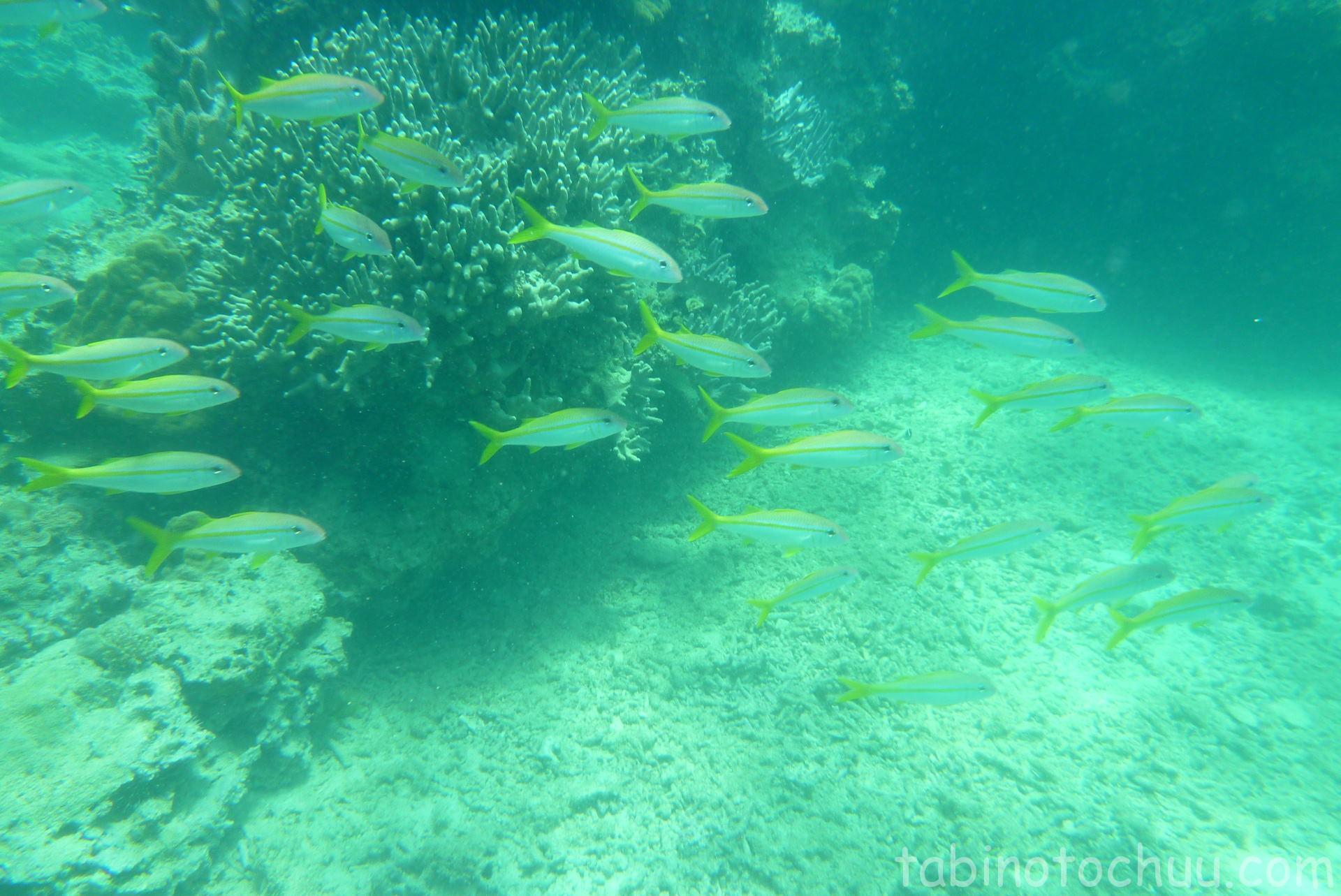 ゴリラチョップ 海中群れ